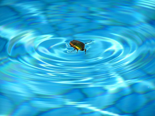 How to keep insects away from your pool poolmax pool builder How to draw swimming pool water