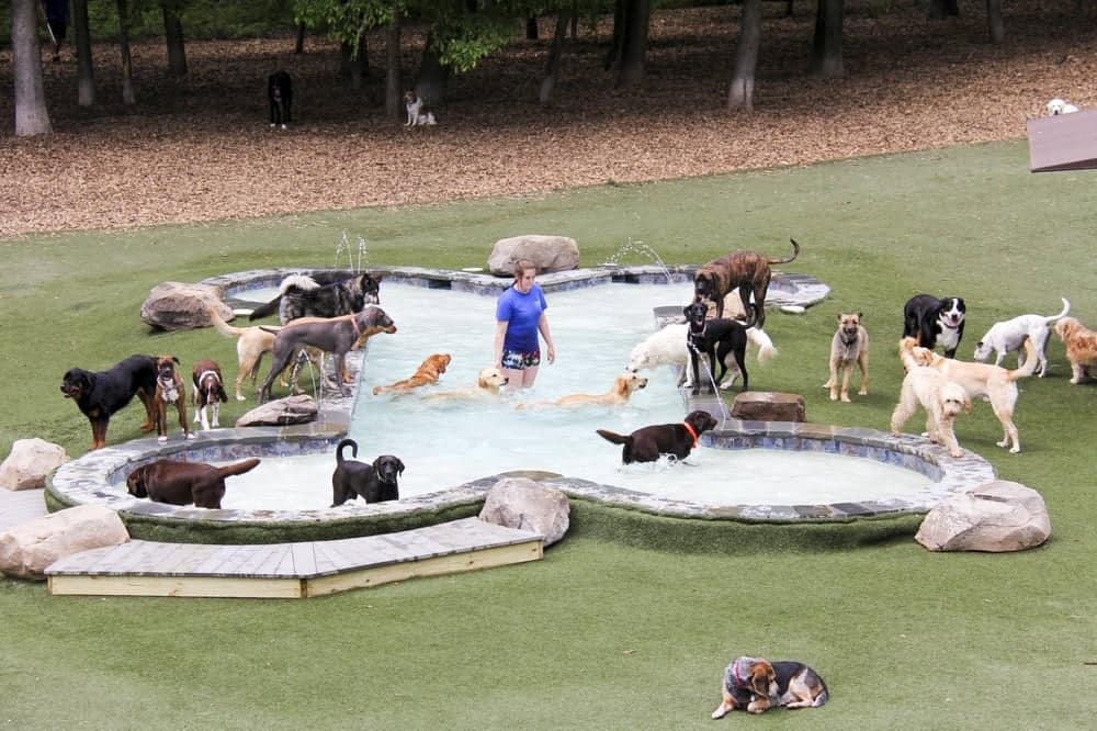 Bone-shaped Pool