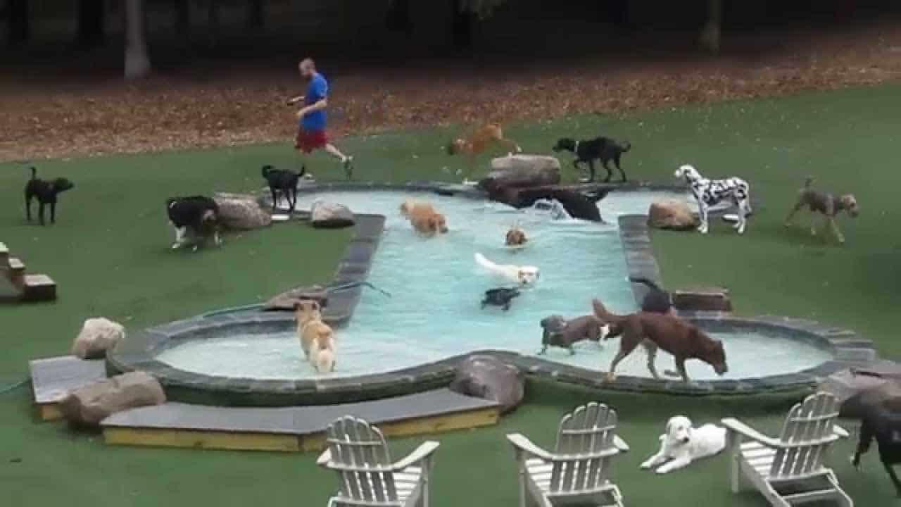 bone shape pool
